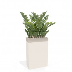 Bac de plantes - Zamias