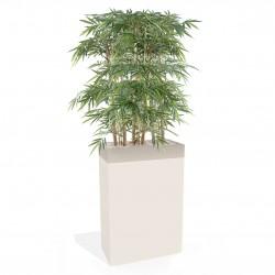 Bac de plantes - Bambous